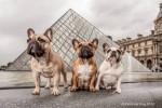 #Finance : Animalbox fusionne avec Doggybox pour devenir le leader des box animalières