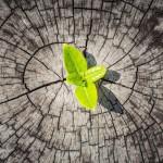 #Psychologie : L'entrepreneuriat, ou l'art de tirer parti des crises