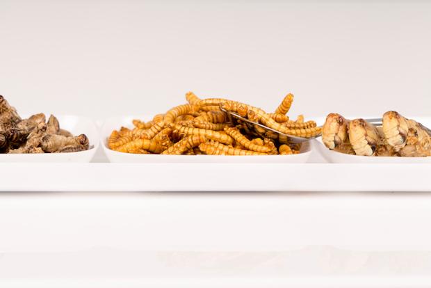 food insectes