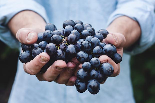 winetechvigne
